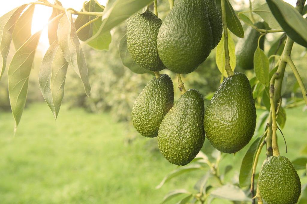 Seasonal orchard activity